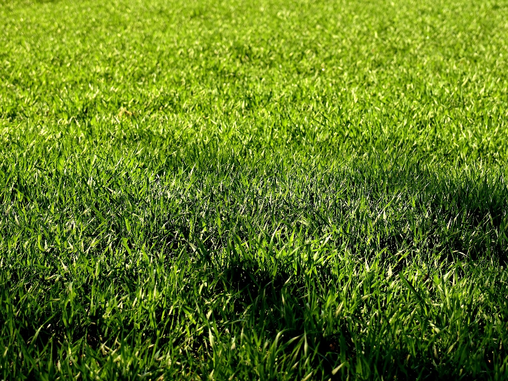 Why Is My Grass Different Shades Of Green Finestlawns Com