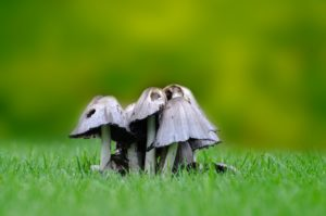 Read more about the article Why are mushrooms growing on my lawn?