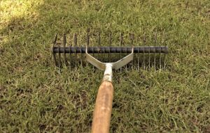 Read more about the article When should I scarify my lawn?