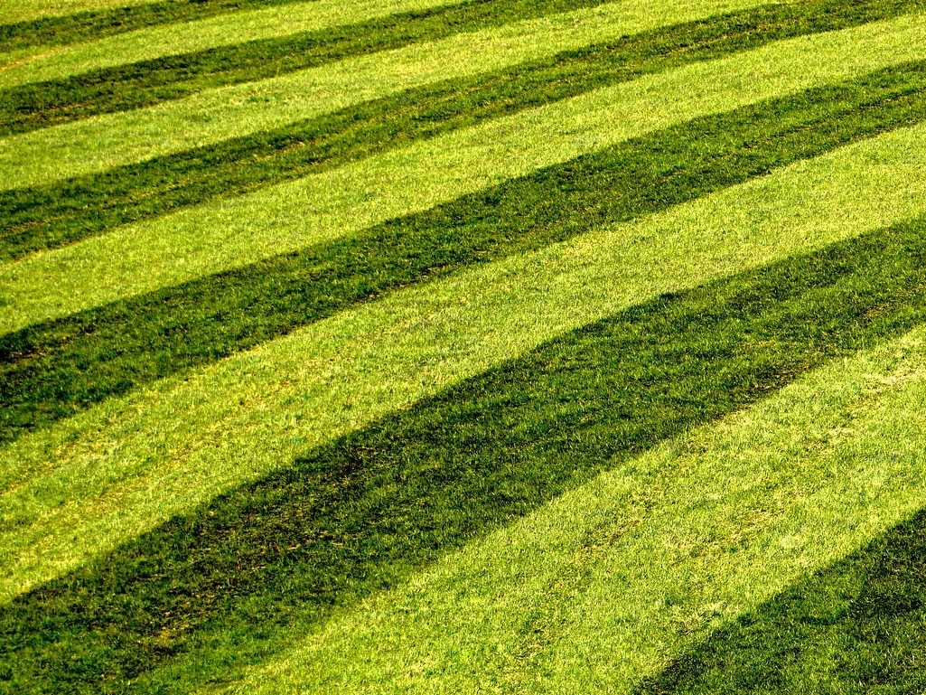 Read more about the article How to stripe a lawn without a roller
