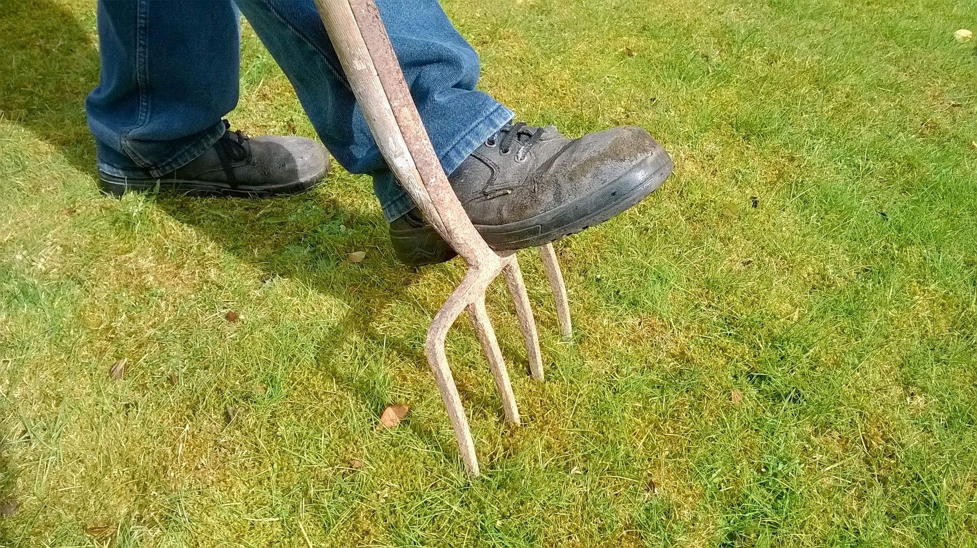 Read more about the article When is the best time to aerate a lawn