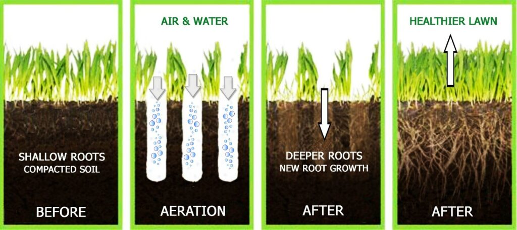 Why aeration is important in a lawn.