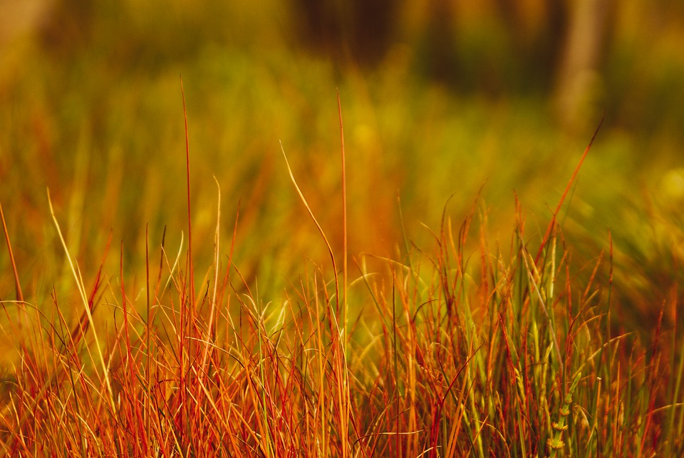 You are currently viewing Why is my grass green on top but brown underneath? 5 common causes explained